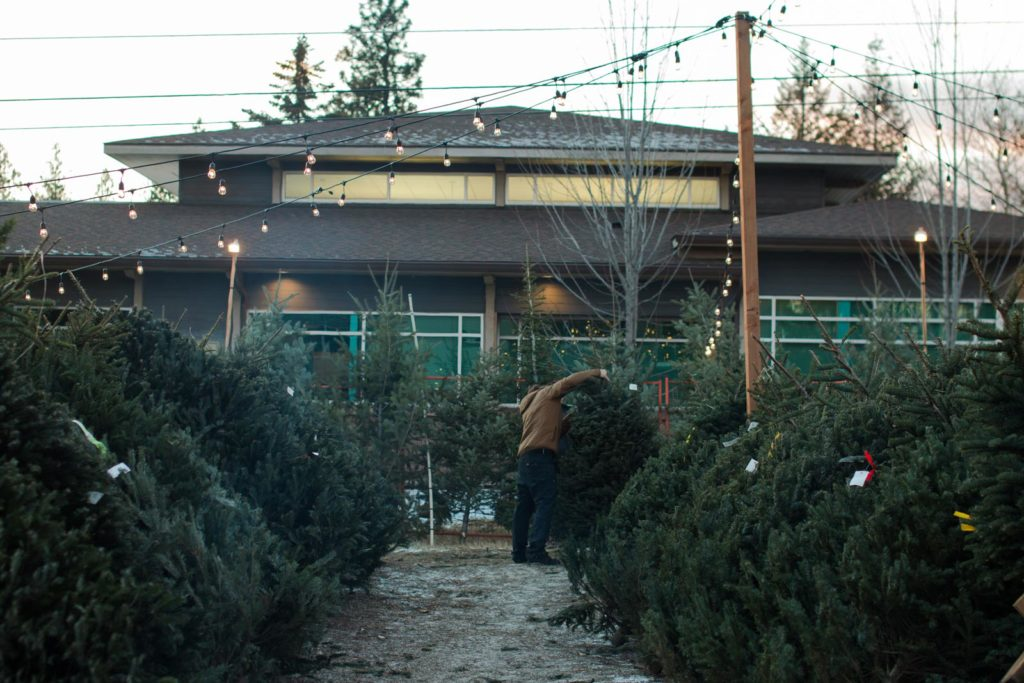 Christmas trees lot in Spokane, Washington.